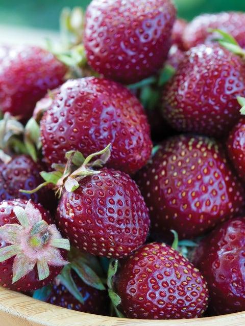 Strawberry, Purple Wonder