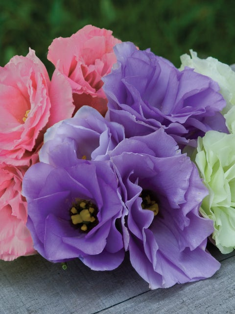 Lisianthus, Rose Bouquet Collection