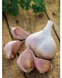 Garlic, Metechi
