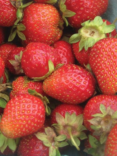 Strawberry, Chandler