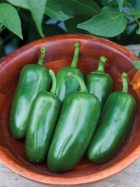 Pepper, Hot, Jalapeño M