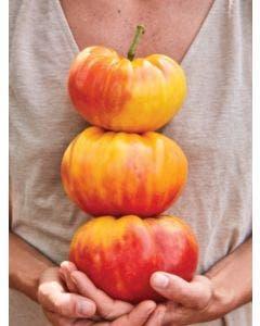 Tomato, Big Rainbow