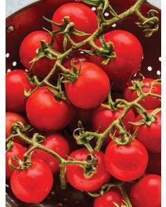 Tomato, Gardeners Delight