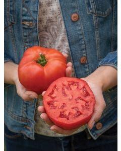 Tomato, Bodacious Hybrid