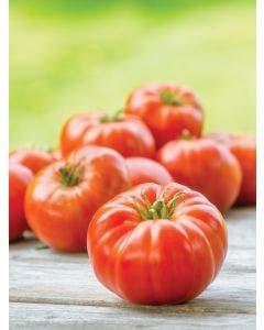 Tomato, Mortgage Lifter