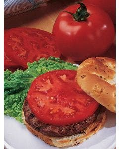 Tomato, Supertasty Hybrid