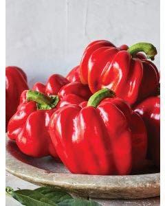 Pepper, Hot, Real Deal Hybrid