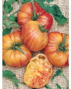 Tomato, Mr. Stripey