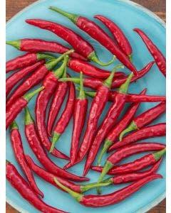 Pepper, Hot, Dragon Cayenne