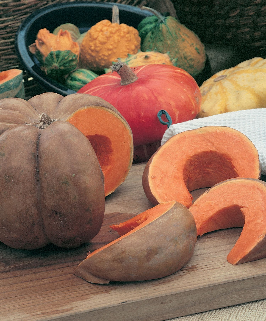 10 Seeds Heirloom Organic Non GMO Musquee De Provence PUMPKIN