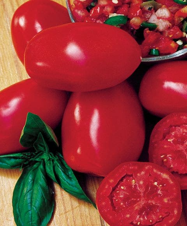 Tomato, Fresh Salsa Hybrid