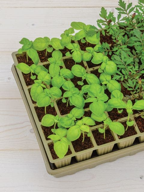 72 Cell Self-Watering Eco-Friendly Ultimate Growing System