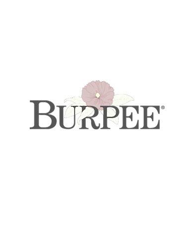 Okra, Red Velvet Organic