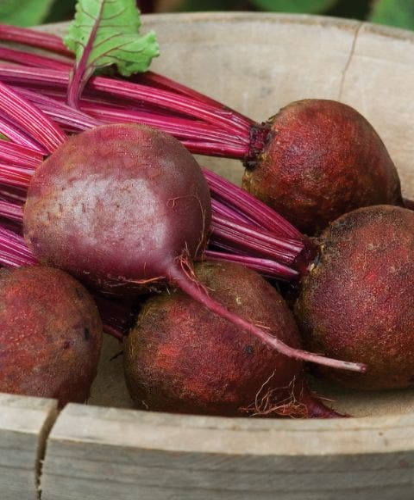 Beet, Detroit Dark Red Organic