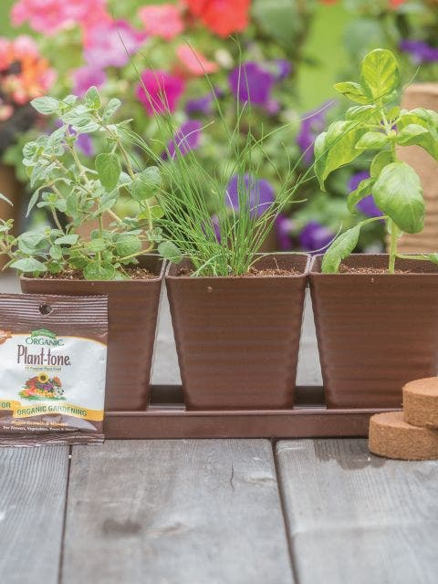 All-In-One Burpee Culinary Herb Garden