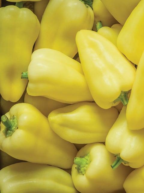 Pepper, Sweet, Slovana Hybrid