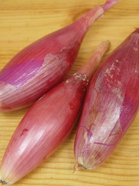 Onion, Italian Torpedo
