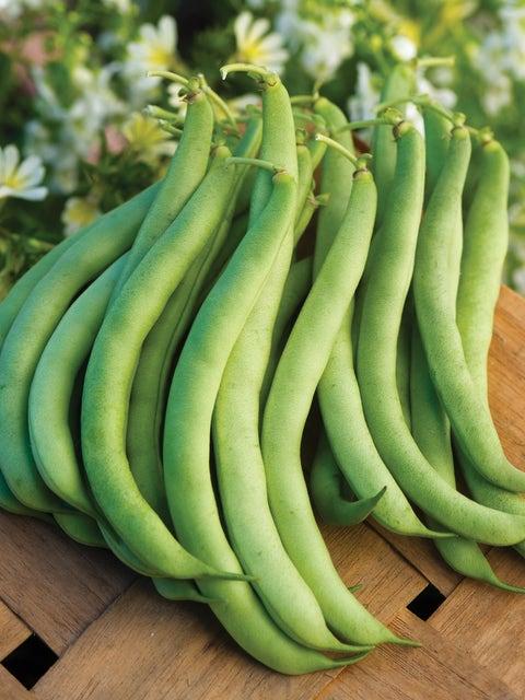 Bean, Bush, Burpees Stringless Green Pod
