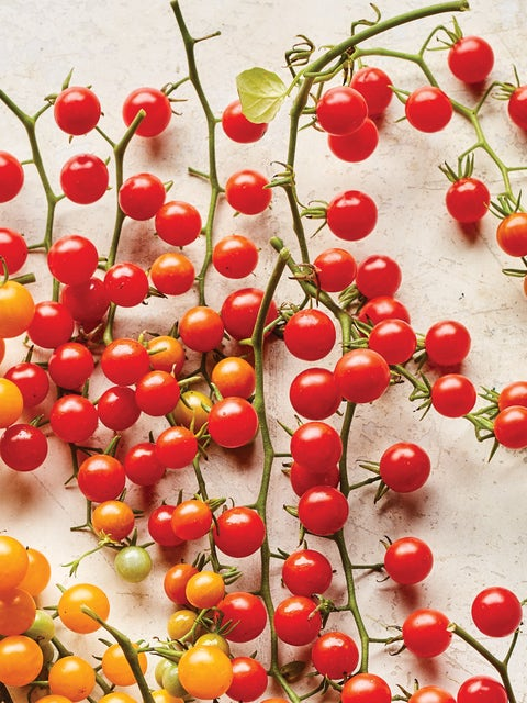 Tomato, Red Currant
