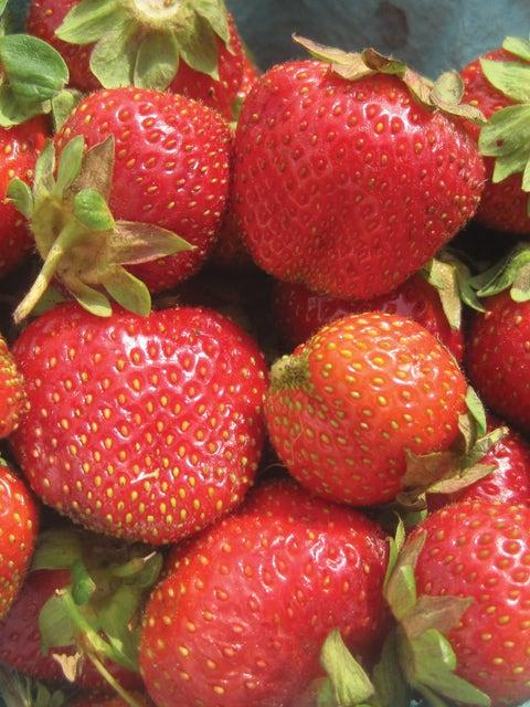 Strawberry, Camarosa