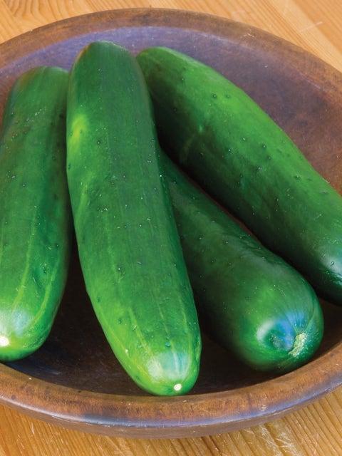 Cucumber, Burpless Beauty