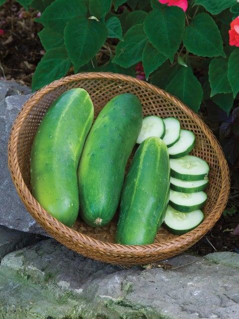 Cucumber, Burpee Hybrid II
