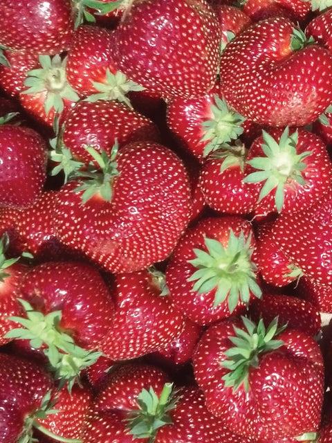 Strawberry, Flavorfest