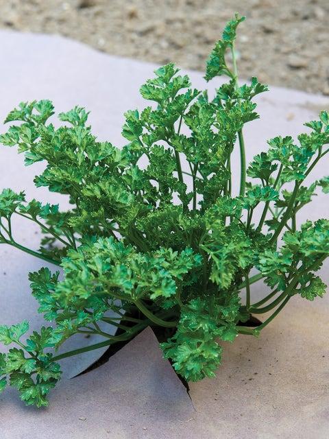 WeedGuard Plus Fertilized Mulch