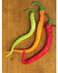 Pepper, Hot, Sweet Thing