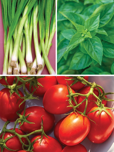 Mediterranean Garden Mix