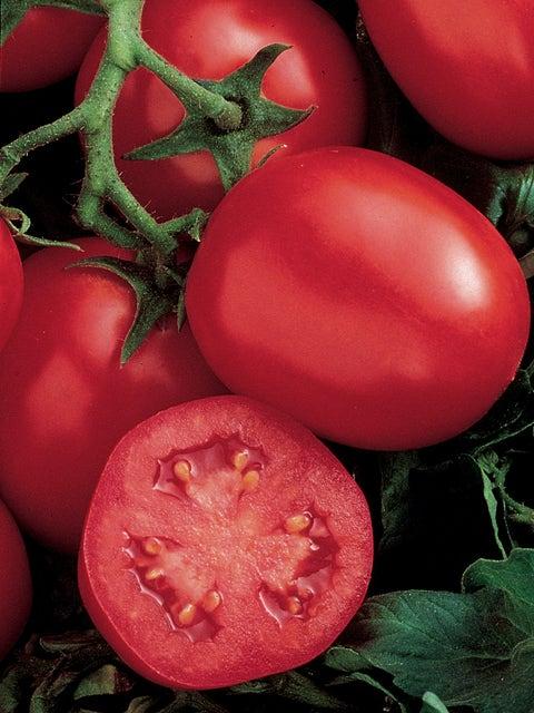 Tomato, Ensalada Hybrid