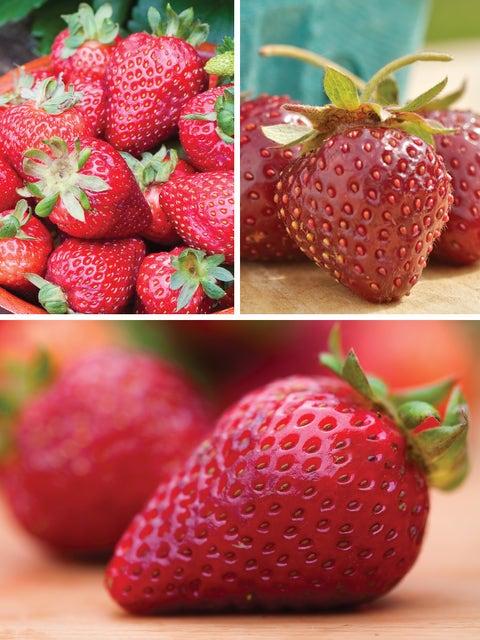Strawberry, All Season Collection