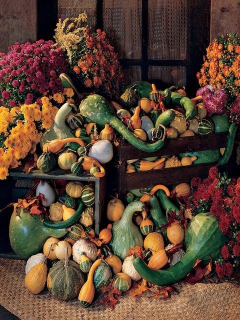 Gourd, Ornamental Big Gourds Mix