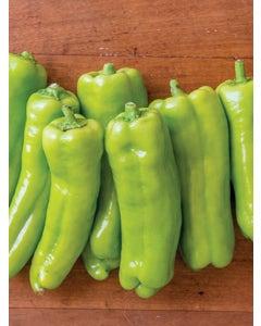 Pepper, Sweet, Long Tall Sally Hybrid