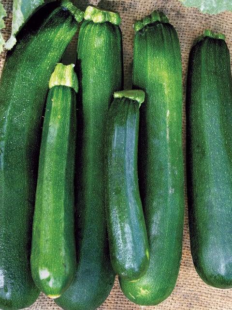 Squash, Zucchini Black Beauty Organic