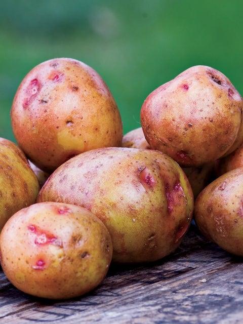 Potato, Red  Gold