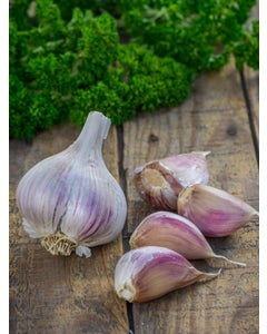 Garlic, Georgia Crystal