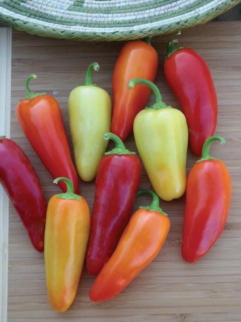 Pepper, Hot, Santa Fe Grande