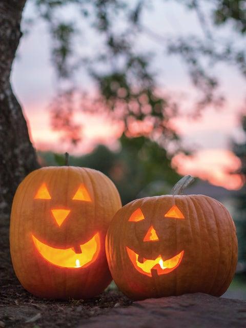 Pumpkin, Jack O Lantern