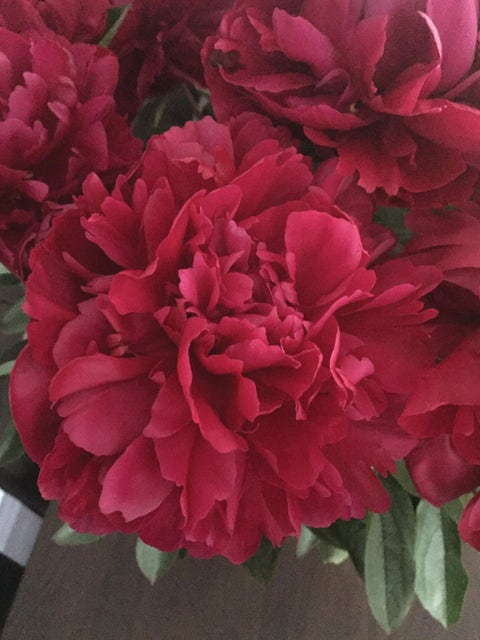 Peony, Lady in Red