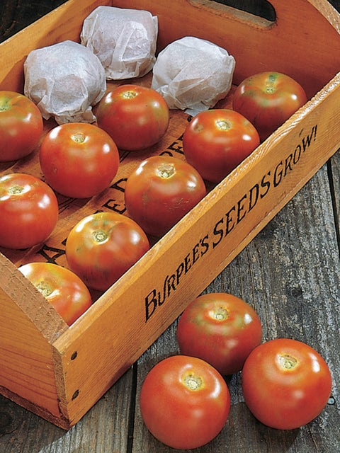 Tomato, Burpees Long-Keeper