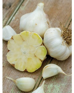 Garlic, Transylvania