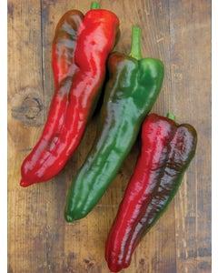 Pepper, Sweet, Thunderbolt Hybrid