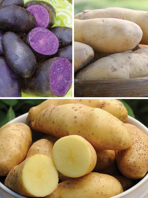 Potato, Fingerling Collection
