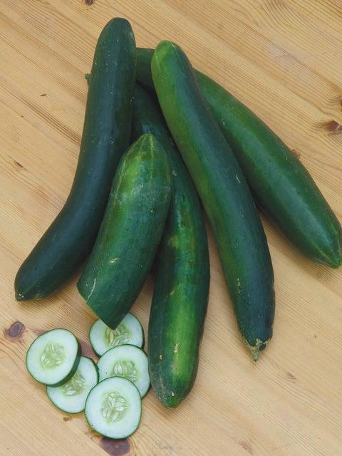 Cucumber, Sweet Success Hybrid