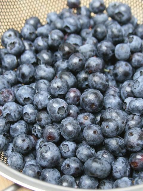 Blueberry, Northland