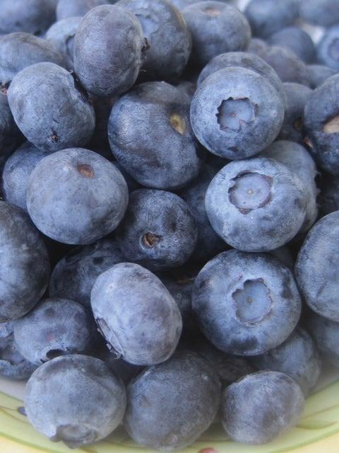 Blueberry, Jewel