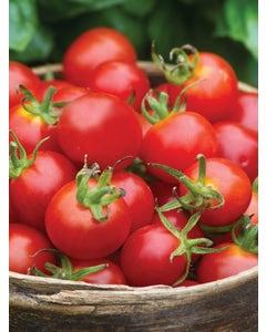 Tomato, Baby Boomer Hybrid