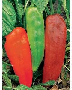 Pepper, Sweet, Corno di Toro