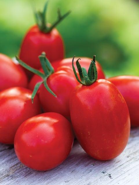 Tomato, Mighty Sweet Hybrid